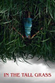 W wysokiej trawie