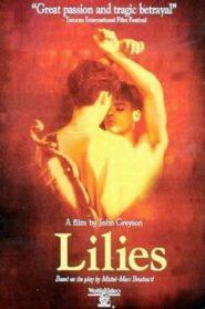 Lilies – Les feluettes
